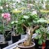 Прочие растения